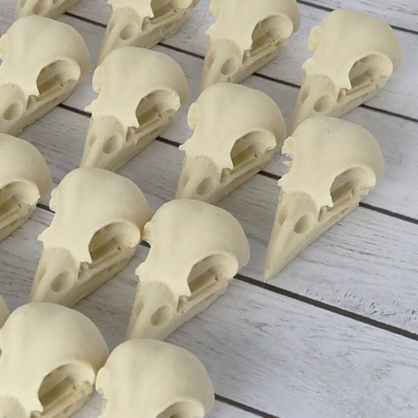 (L) Bird Skull Vogelschädel ohne Hintergrund