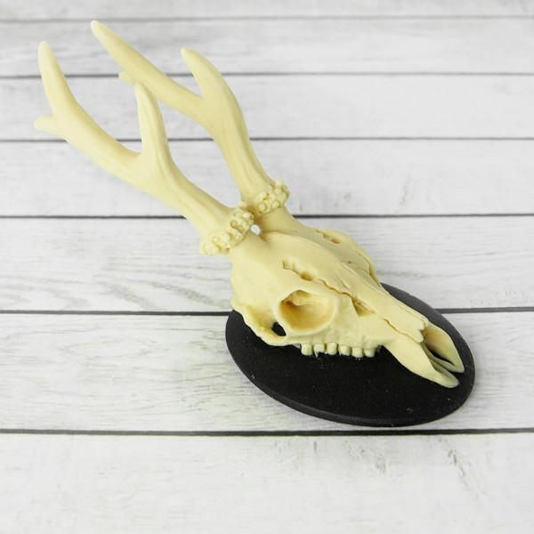 Kamee (L) Deer Skull Hörner Geweih