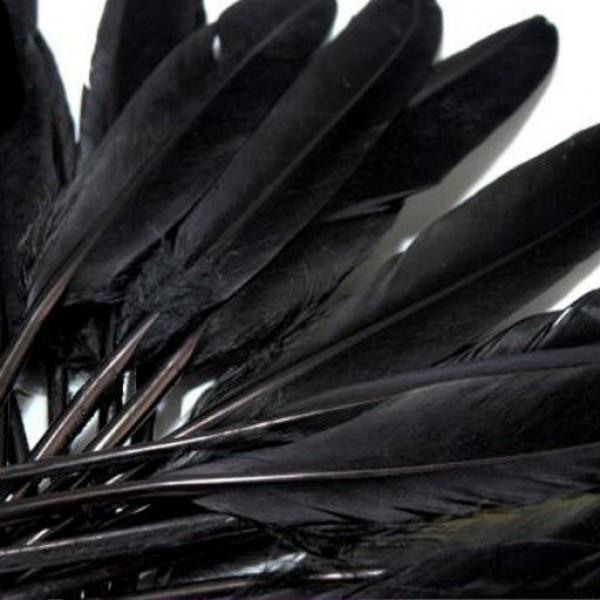 20 Entenfedern basteln Schwarz raben krähen