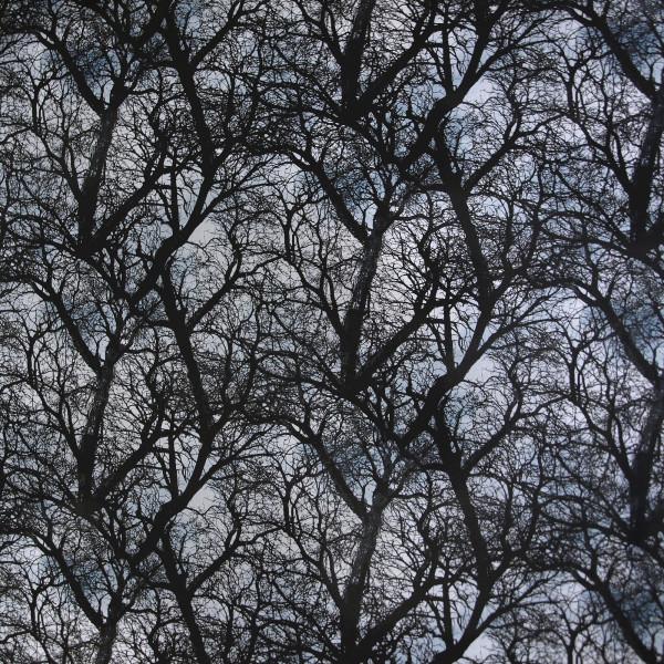 Baumwollstoff Zweige